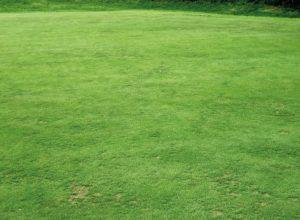 Advantages Of Artificial Grass
