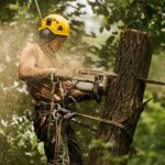 What Can an Arborist Do for You?
